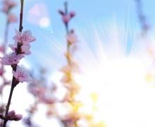 Фотопечать на рулонных шторах – Цветы и букеты_10