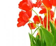 Фотопечать на рулонных шторах – Цветы и букеты_12
