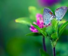 Фотопечать на рулонных шторах – Цветы и букеты_1