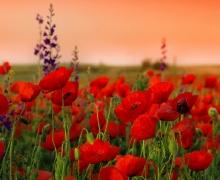 Фотопечать на рулонных шторах – Цветы и букеты_2