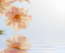 Фотопечать на рулонных шторах – Цветы и букеты_3