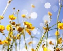 Фотопечать на рулонных шторах – Цветы и букеты_4