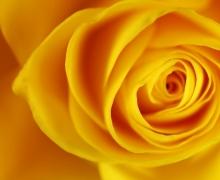 Фотопечать на рулонных шторах – Цветы и букеты_5