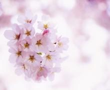 Фотопечать на рулонных шторах – Цветы и букеты_6