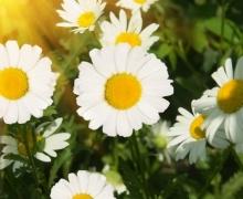 Фотопечать на рулонных шторах – Цветы и букеты_7