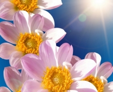 Фотопечать на рулонных шторах – Цветы и букеты_8