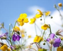 Фотопечать на рулонных шторах – Цветы и букеты_9