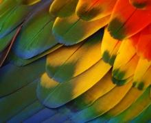 Фотопечать на рулонных шторах – Узоры и текстуры_12
