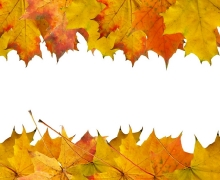 Фотопечать на рулонных шторах – Листья и деревья_2