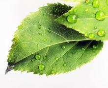 Фотопечать на рулонных шторах – Листья и деревья_5