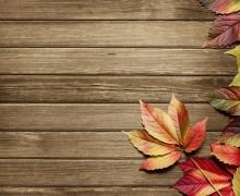 Фотопечать на рулонных шторах – Листья и деревья_6