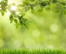 Фотопечать на рулонных шторах – Листья и деревья_8